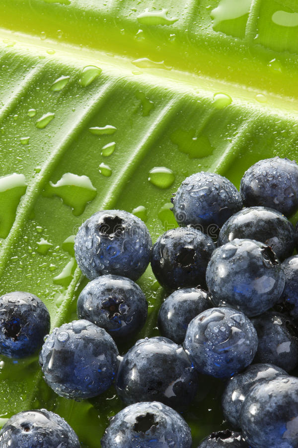 Download Blueberries Water Drops Leaf Background Stock Photo - Image: 29634012