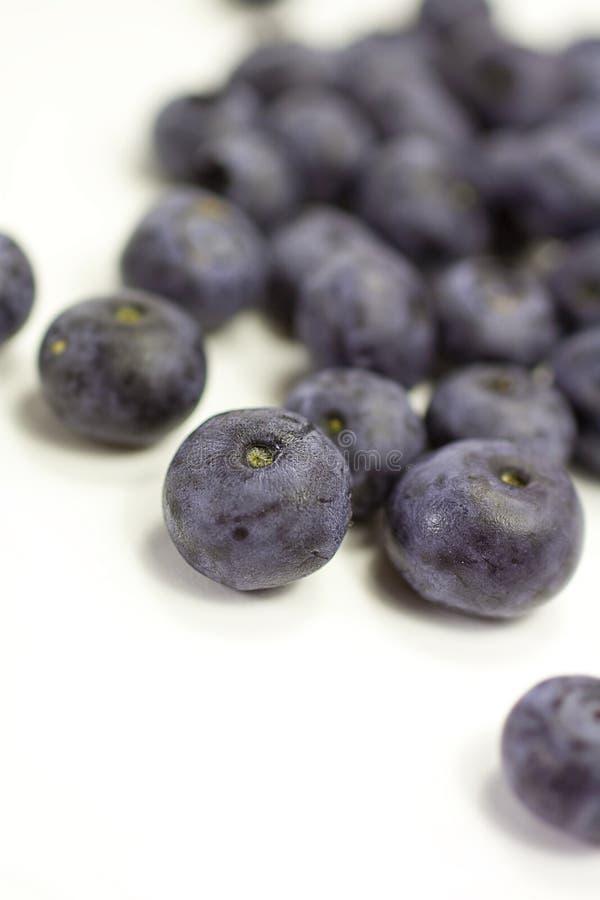 Blueberries on white stock photos