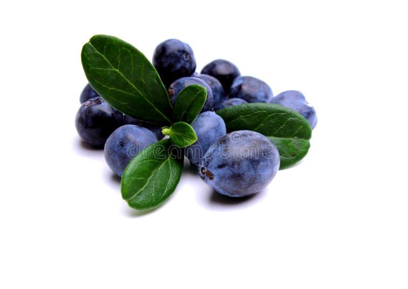Blueberries royalty free stock photos