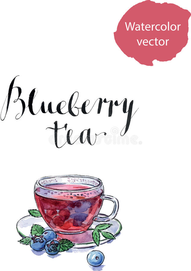 Blueberry antioxidant organic tea. Blueberry antioxidant organic cup of tea with blueberries and leaves, watercolor, hand drawn - vector Illustration royalty free illustration