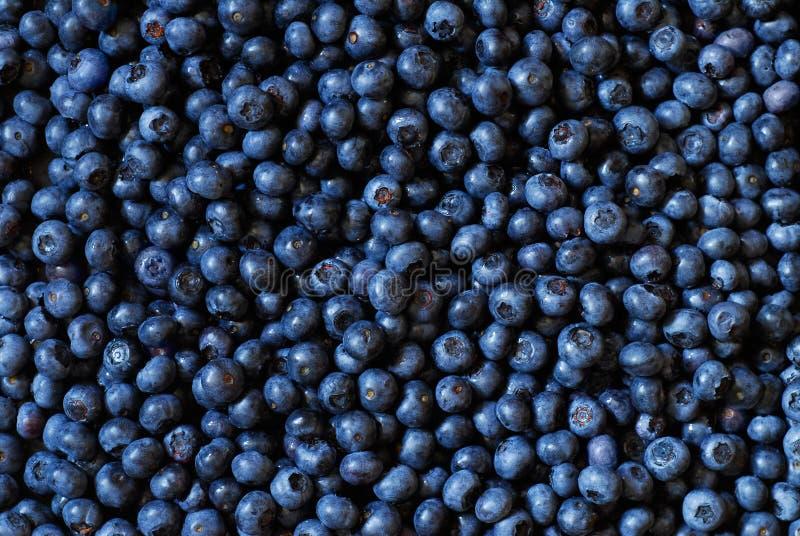 Blueberry Background stock images