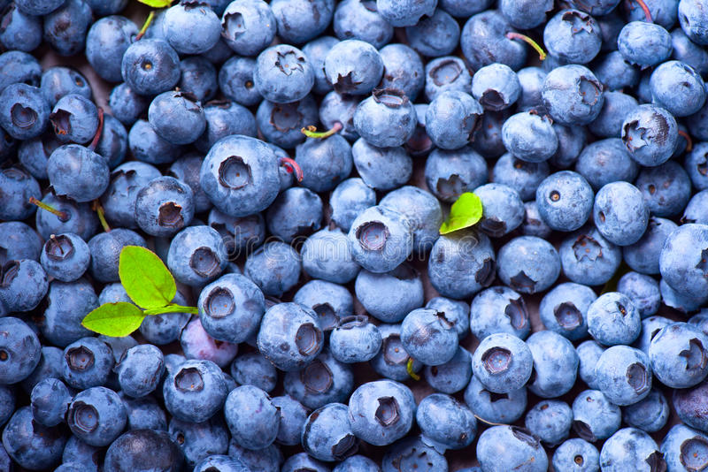 Blueberry background. Ripe blueberries closeup stock image