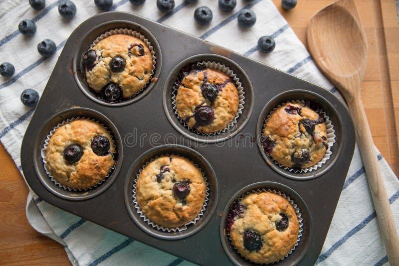 Blueberry Banana Muffins stock photos