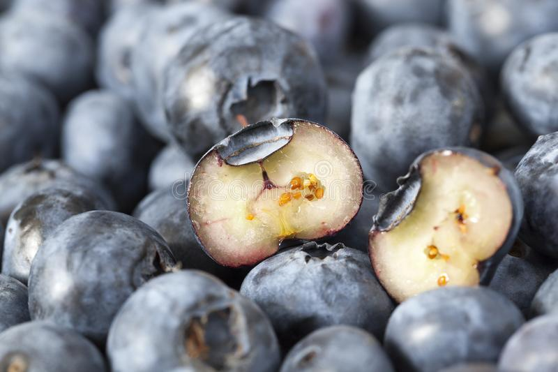 Blueberry berry stock images