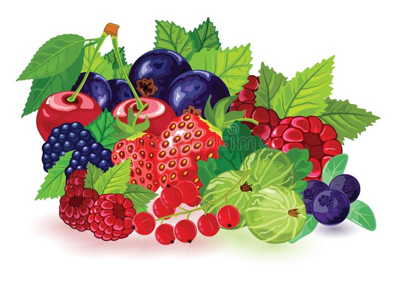 Blueberry, blackberry, gooseberry, red and black currant, raspberry, strawberry, cherry with leaves. stock illustration