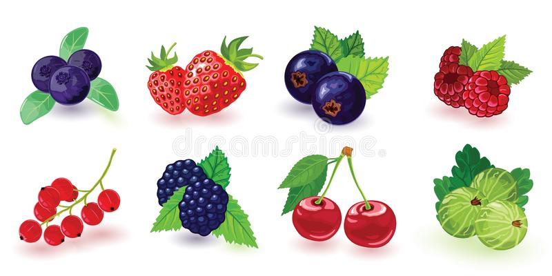 Blueberry, blackberry, gooseberry, red and black currant, raspberry, strawberry, cherry with leaves. vector illustration