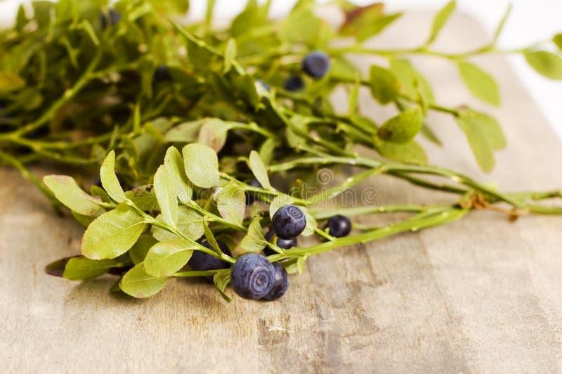 Blueberry Bush Royalty Free Stock Images