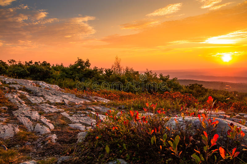 Blueberry bushes turn a beautiful vivid red in early autumn. As the sun sets at the top of High Point State Park, New Jersey stock photo
