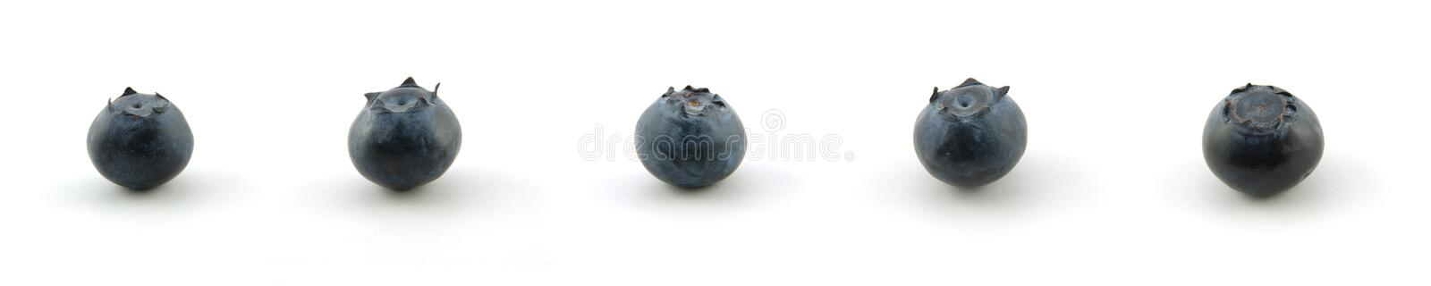 Blueberry collection stock photo