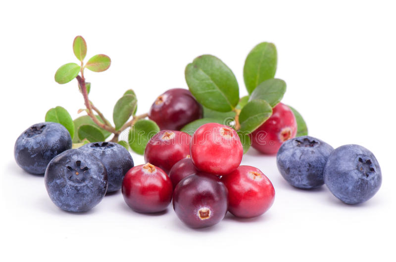 Blueberry and cowberry with green leaves. On white background stock image