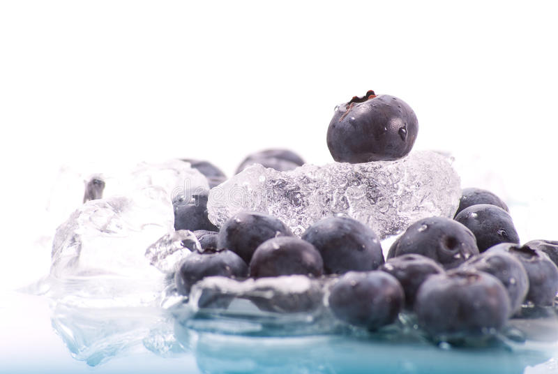 Blueberry on Ice. With Reflection royalty free stock images