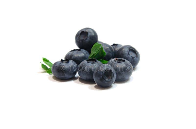 Blueberry. Isolated on white background royalty free stock photography