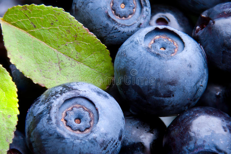 Blueberry with leaves close-up stock photography