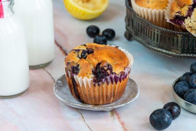 Blueberry and lemon muffins royalty free stock photo