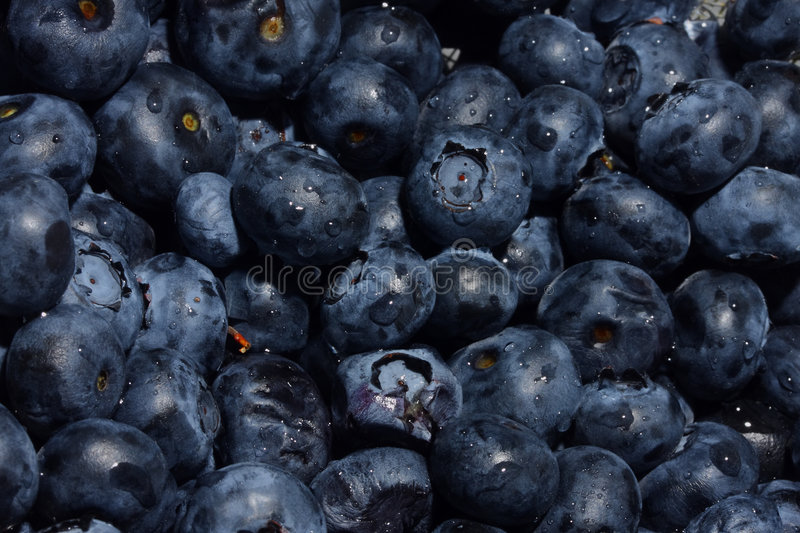 Blueberry Macro. Blueberries macro in group in strainer royalty free stock images