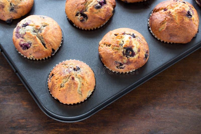 Blueberry muffins stock photo