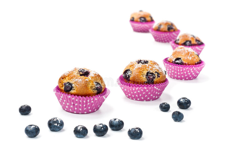 Blueberry muffins isolated on white royalty free stock image