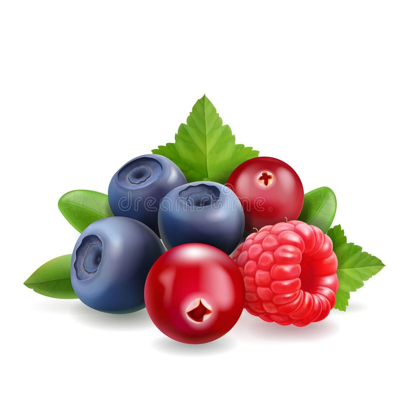Blueberry, raspberry and cranberry Sweet forest berry. 3d vector Realistic illustration royalty free illustration