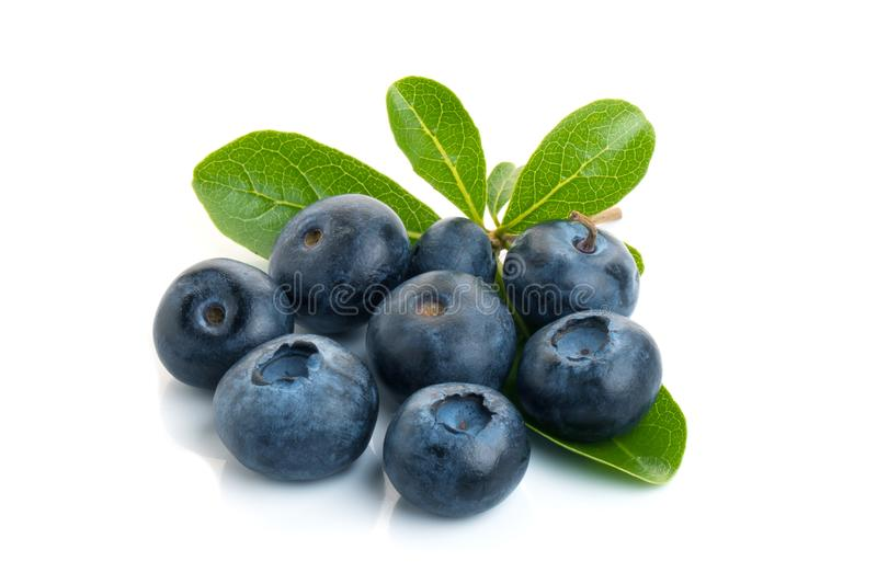 Blueberry. Two fresh blueberries with leaves isolated on white background. With clipping path stock image