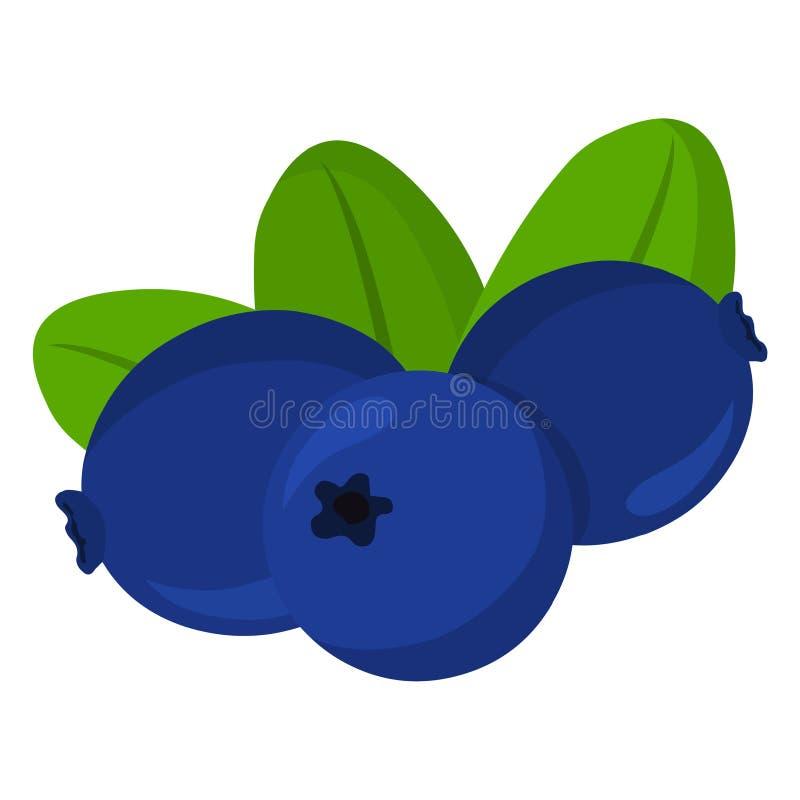 Blueberry vector..Fresh blueberry illustration. Vector isolated on white background vector illustration