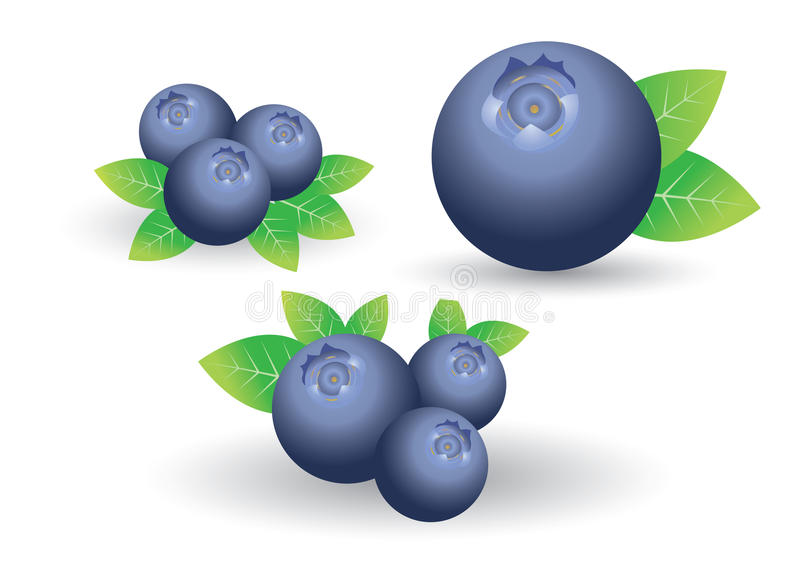 Blueberry vector royalty free illustration