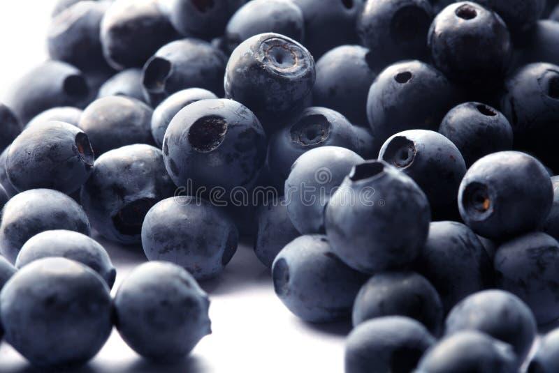 Blueberry on white stock photo