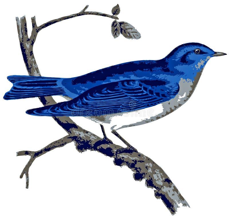 Bluebird da montanha de América. ilustração royalty free