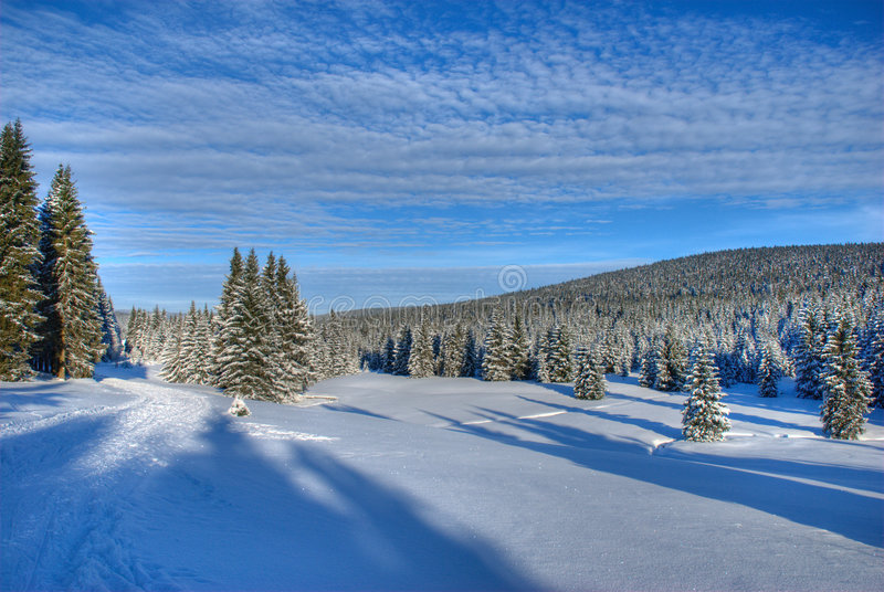 BlueBlue Winter Sky in the Jizera Mountains royalty free stock images