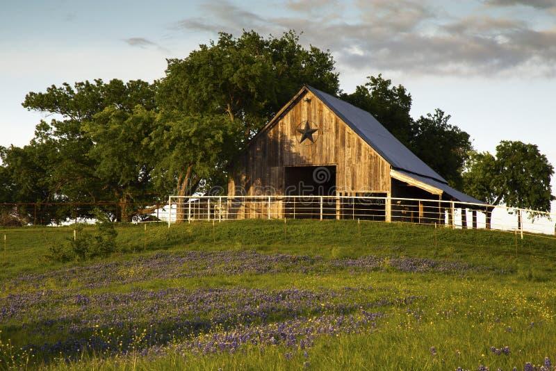 Bluebonnet śladu stajnia Blisko Ennis, Teksas zdjęcia royalty free