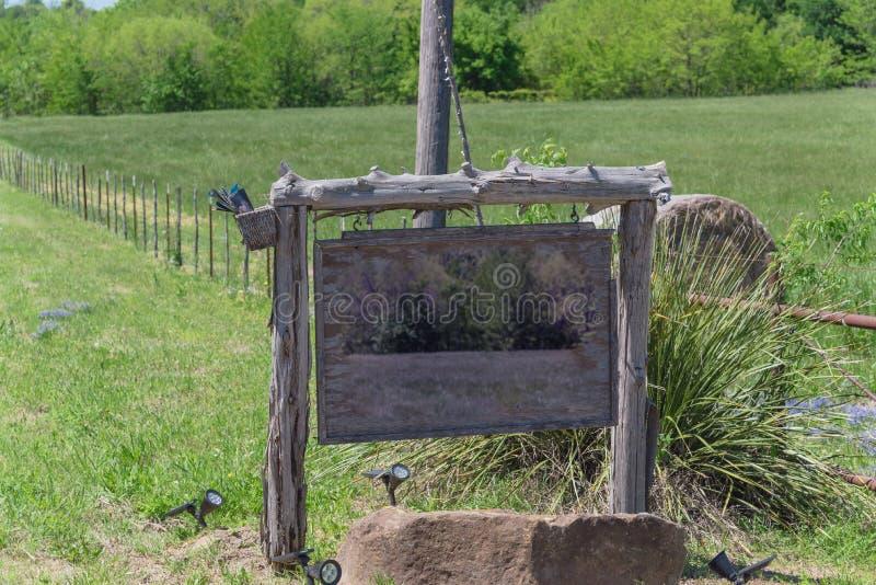 Bluebonnet del fiore nel paesaggio rurale della campagna del Texas fotografia stock libera da diritti