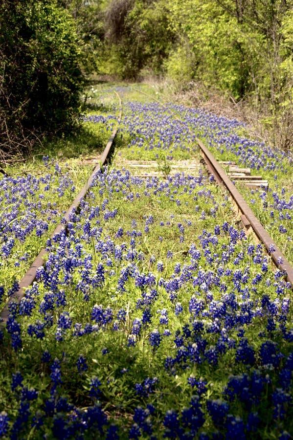 Bluebonnets среди покинутых железнодорожных путей стоковое изображение