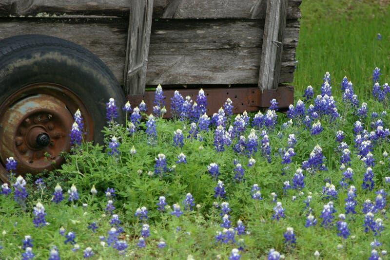 Bluebonnets e vagão de Texas foto de stock