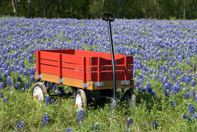 Bluebonnets et chariot rouge images libres de droits