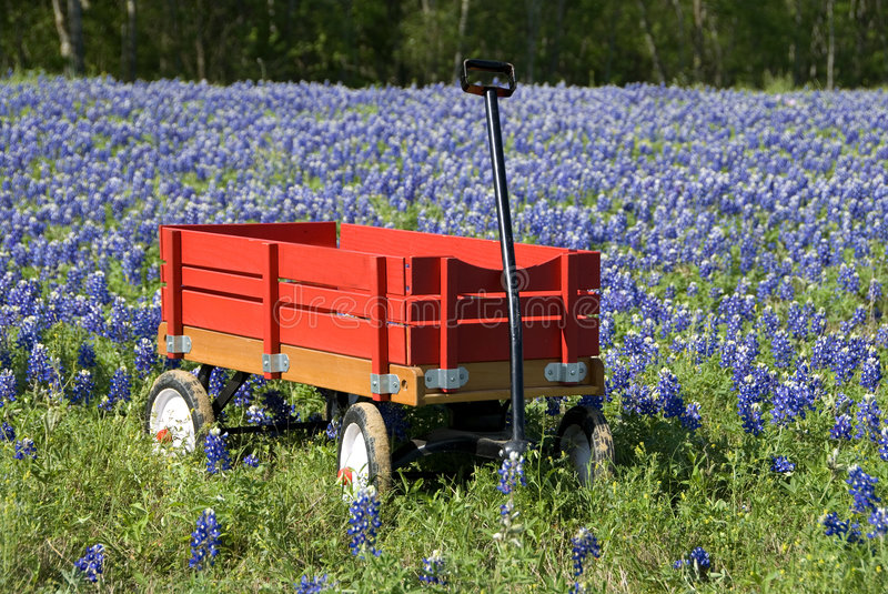 Bluebonnets and Red Wagon royalty free stock images