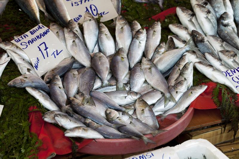 Bluefish with price tag at fish market. Raw wet bluefish with price tag at fish market in Istanbul, Turkey stock photo