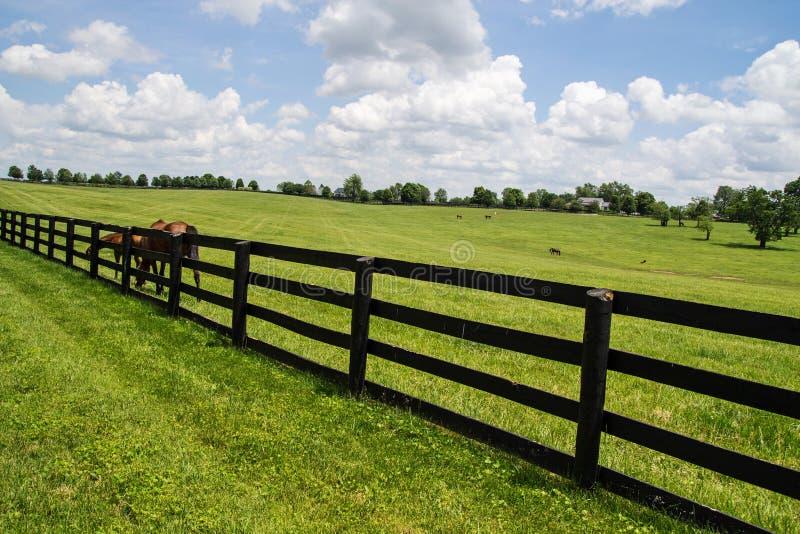 bluegrass Kentucky zdjęcia royalty free