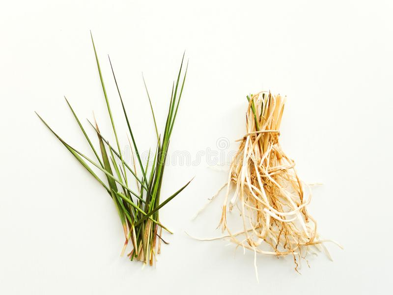 Bluegrass with roots. Bluegrass Kentucky with roots on wooden background. Shallow dof stock photo
