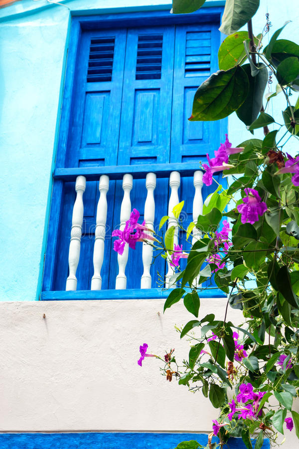 bluen blommar fönstret royaltyfria bilder