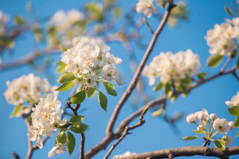 bluen blommar skyfjädern royaltyfria bilder