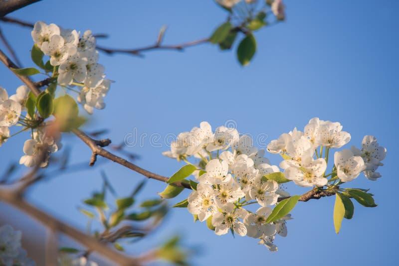 bluen blommar skyfjädern royaltyfri bild