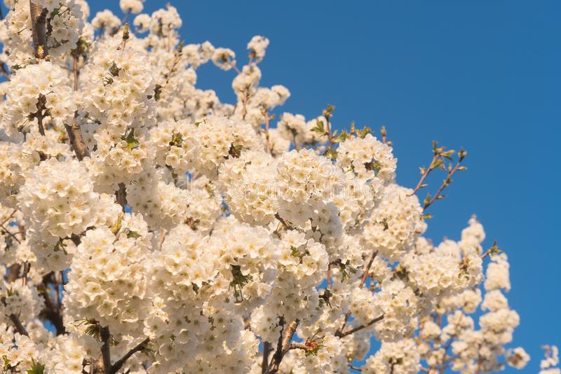 bluen blommar skyfjädern royaltyfria foton
