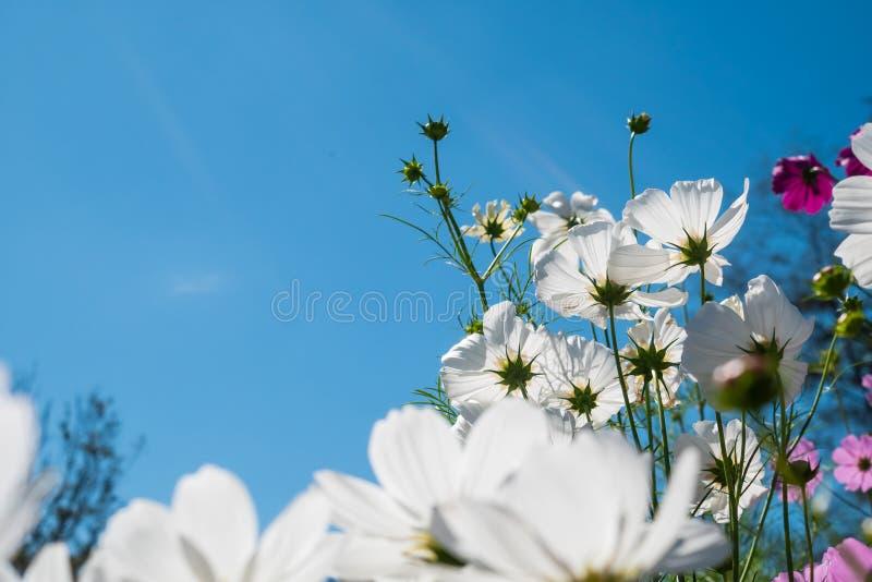 bluen blommar skywhite royaltyfria foton
