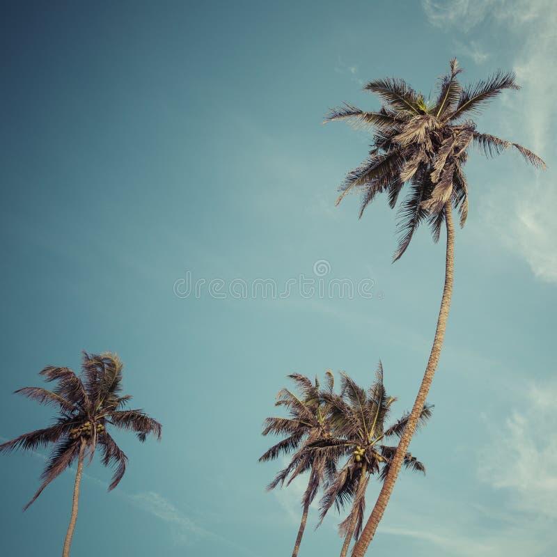 bluen gömma i handflatan skyen Palm Beachmodebakgrund fotografering för bildbyråer