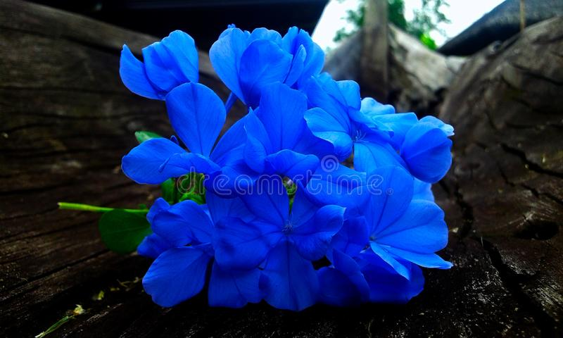 Bluer than Blue stock photography