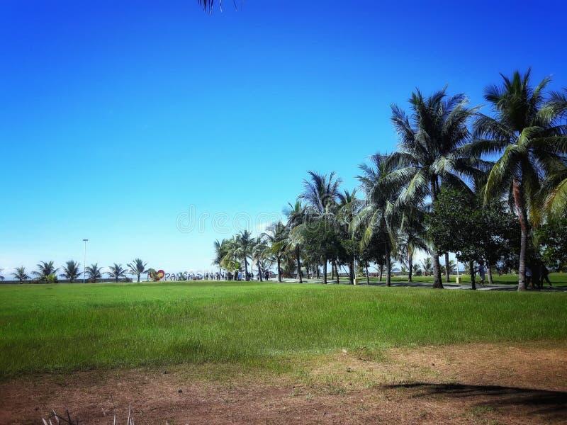 BlueSky; Baywalk; PalmTrees; Praia; Greenfield; imagens de stock