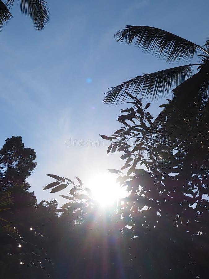 Bluesky solskenskugga arkivbild