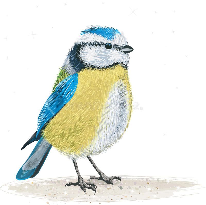 Bluetit royalty free illustration