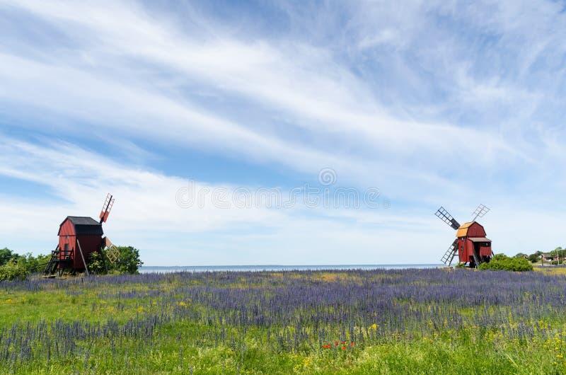 Blueweed del fiore da due mulini a vento di legno tradizionali immagini stock libere da diritti