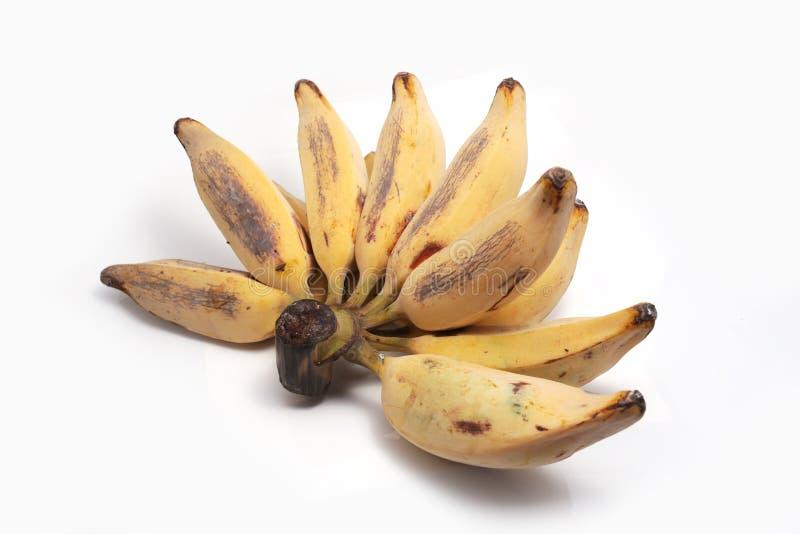 Bluggoe d'argento, una banana locale della Tailandia fotografia stock