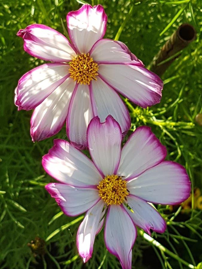 Blume arkivfoto